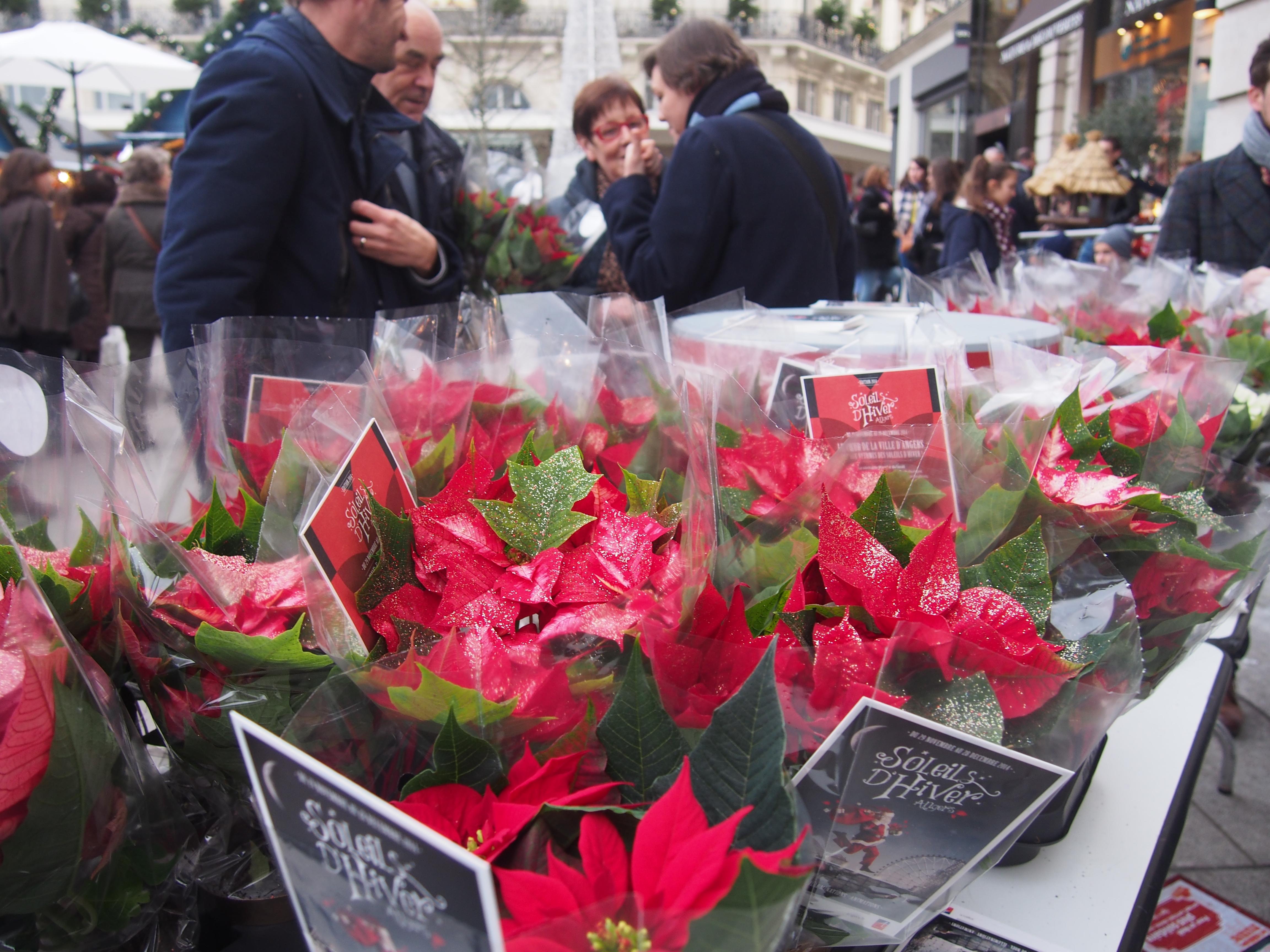 Partenariat Soleils d'hiver (opération des fêtes de fin d'année avec Angers)
