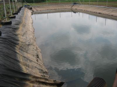 Réserves d'eau, carpes « Amour blanc » et législation… Horticulture et pépinière